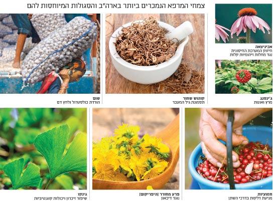 צמחי מרפא / צילומים: Shutterstock/ א.ס.א.פ קריאייטיב, רויטרס