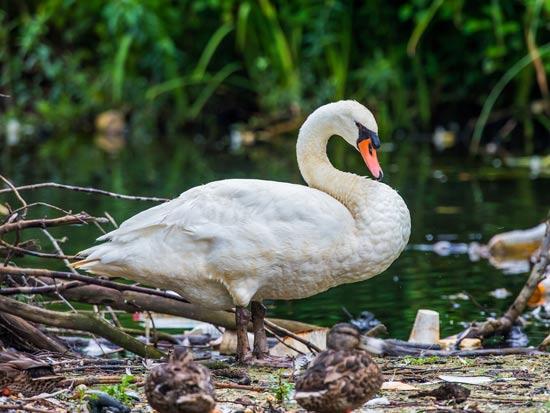 עשרות אלפי בעלי חיים מתים בשנה כתוצאה מזבל פלסטיק / צילום: Shutterstock/ א.ס.א.פ קרייטיב