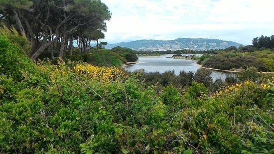 האי סנת מרגריט עם המבט לעיר קאן/ צילום: ספיר פרץ זילברמן