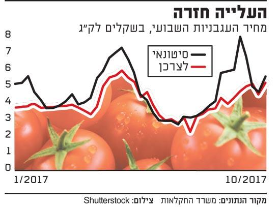 העלייה חזרה-עגבניות