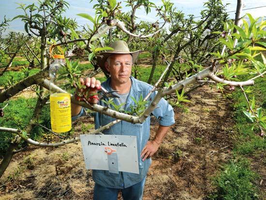 אבי גולדשטיין, דור חמישי לחקלאים מבנימינה / צילום: איל יצהר