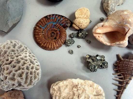 שלל יצורים ימיים קדומים / צילום: מרכז ופיתוח ערבה