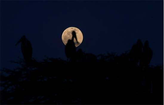 הירח הערב בניירובי, קניה / צילום: רויטרס