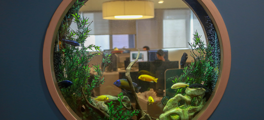 משרדי Claroty / צילום: שלומי יוסף
