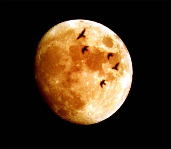 ליקוי ירח מלא בעמאן / צילום: רויטרס