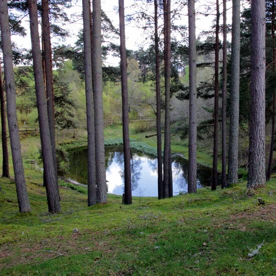 בריכת יער רומנטית/ צילום: ענבל שגיב נקדימון
