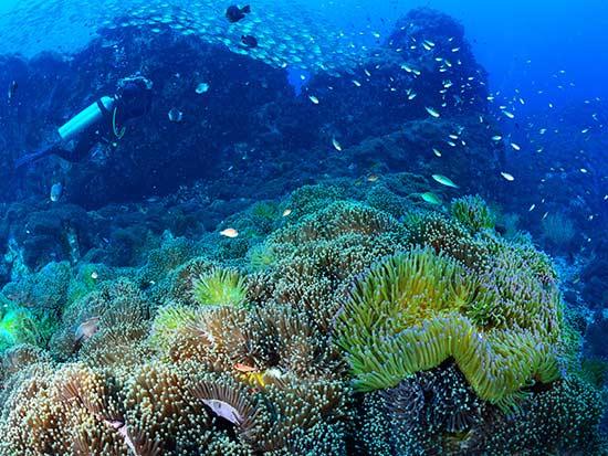 חופים ואתרי צלילה / צילום: שאטרסטוק