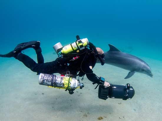 צלילה עם דולפין / צילום: חגי נתיב, תחנת מוריס קאהן לחקר הים
