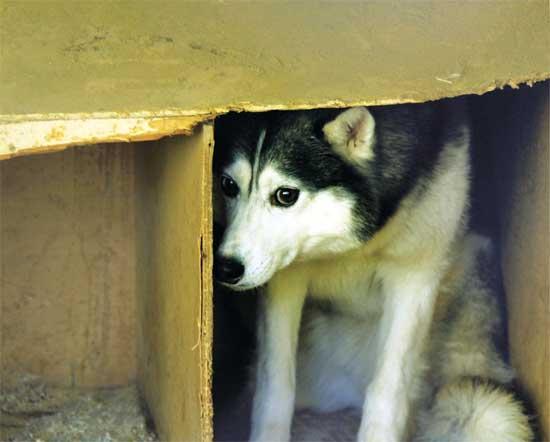 כלבים מריחים פחד/ צילום:  Shutterstock/ א.ס.א.פ קרייטיב