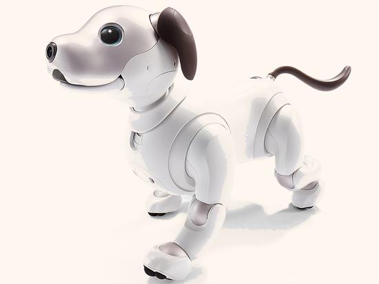 הכלב הרובוטי של סוני ,Aibo/ צילום: איל יצהר