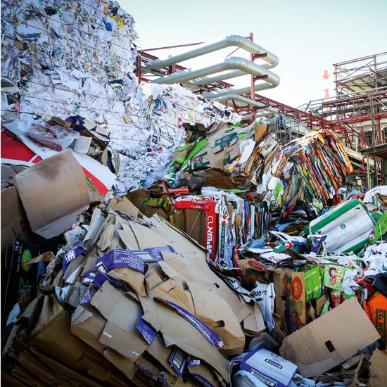 פסולת קרטון לפני שהיא הופכת לחומר גלם / צילום: שלומי יוסף