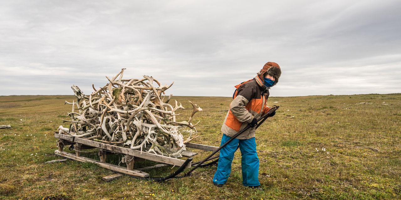 מזחלת עם קרני איילים / צילום: אנה גרטלר