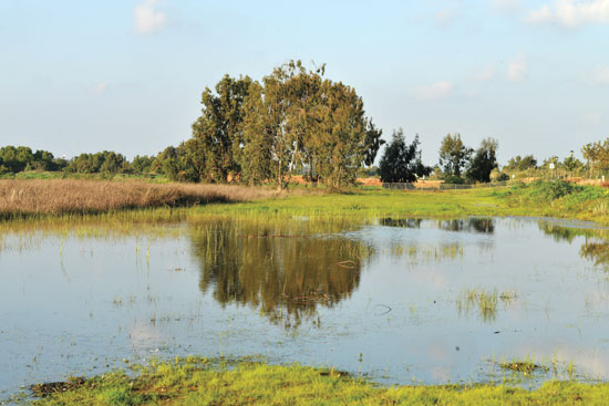 פארק הרצליה לאחר הגשם/  צילום: תמר מצפי