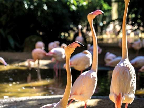 פארק הציפורים, אפשר להאכיל פלמינגו  / צילום: שאטרסטוק