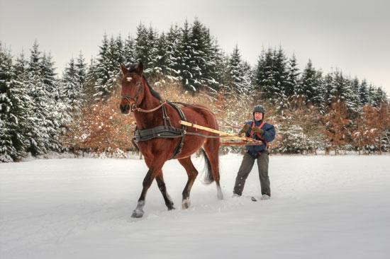סקי רתום לפוני / צילום: צילומים:  Shutterstock | א.ס.א.פ קריאייטיב