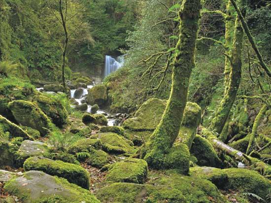 היער הקסום ומפל המים טורק / צילום Shutterstock | א.ס.א.פ קריאייטיב