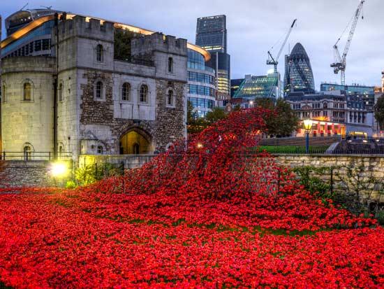 ביום הזיכרון בונים בלונדון מיצב פרחי פלסטיק לזכר ההרוגים / צילום: שאטרסטוק