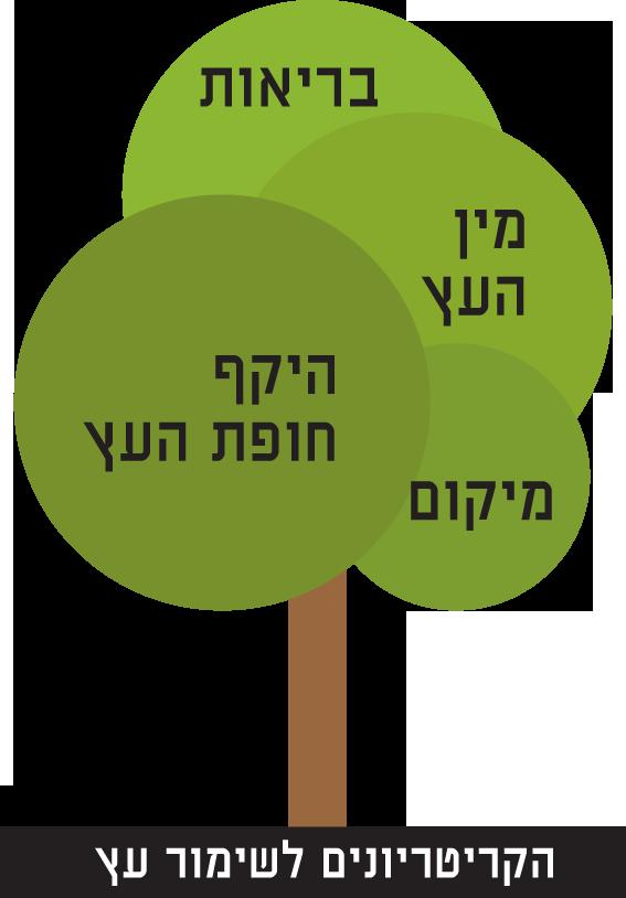 הקריטריונים לשימור עץ