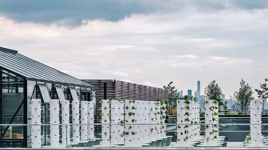 גינה ורטיקלית על גג בבושוויק, ניו יורק /  הדמיה: ODA