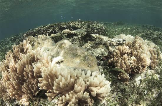שונית אלמוגים מסיימת את חייה / צילום: שאטרסטוק