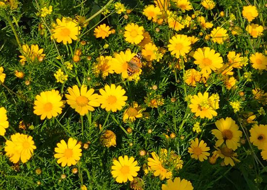 מיליארדי פרפרים נודדים ברחבי הארץ / צילום: פולי טובמן