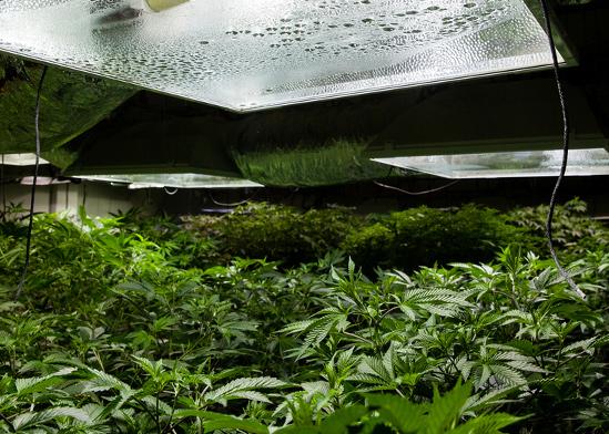 חדר סודי לגידול ועישון מריחואנה באחוזה    / אינפוגרפיק: shutterstock, שאטרסטוק