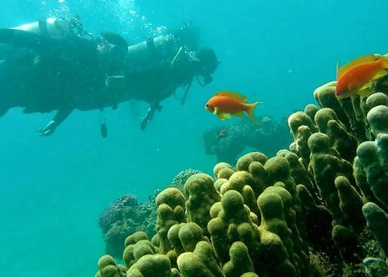 """מפרץ אילת / צילום: ד""""ר אילן מליסטר, המשרד להגנת הסביבה"""