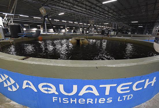 """חוות הדגים ברמת נגב / צילום: יח""""צ"""