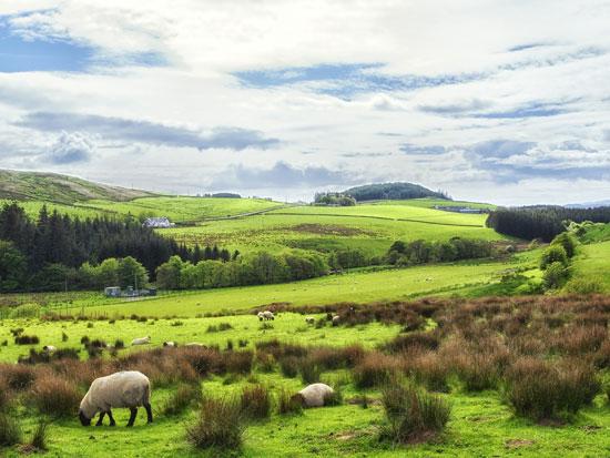 טרברט (Tarbert), אחד מכמה וכמה כפרים יפהפיים בחצי האי/ צילום:  Shutterstock | א.ס.א.פ קריאייטיב