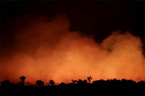 השריפה ביערות הגשם / צילום: רויטרס