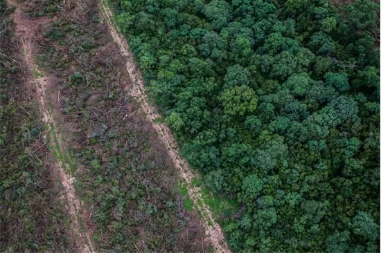יערות בדרום אמריקה / צילום:
