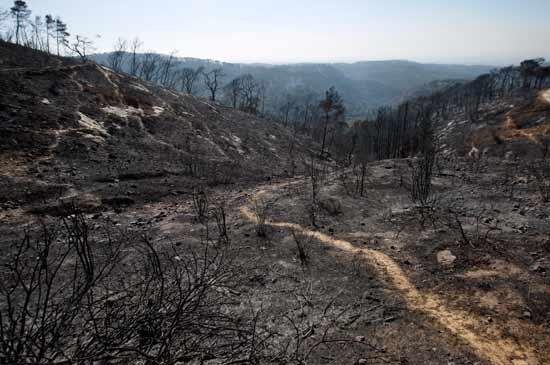 השריפה בכרמל  / צילום:  רויטרס - Amir Cohen