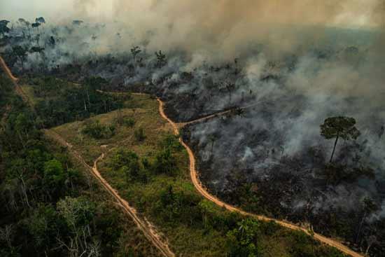 השריפה באמזונס /  צילום:  גרינפיס Victor Moriyama  גרינפיס