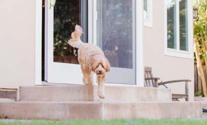 שירותים ביתיים  עבור הכלב/ צילום:יחצ