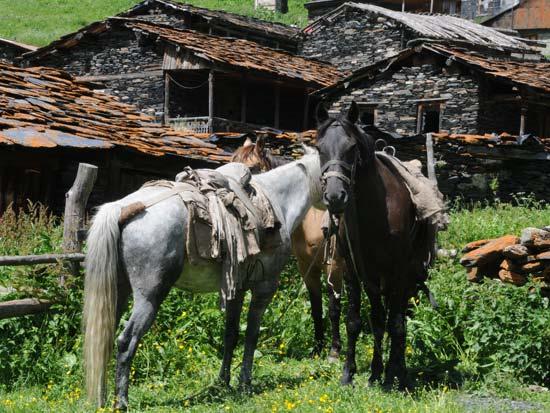 כפר דרטלו/ צילום: יותם יעקובסון