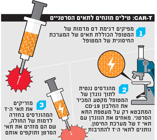 CAR-T טילים מונחים לתאים הסרטניים