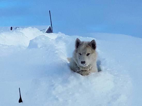 כלבלב בשלג  /  צילום: גליה גוטמן