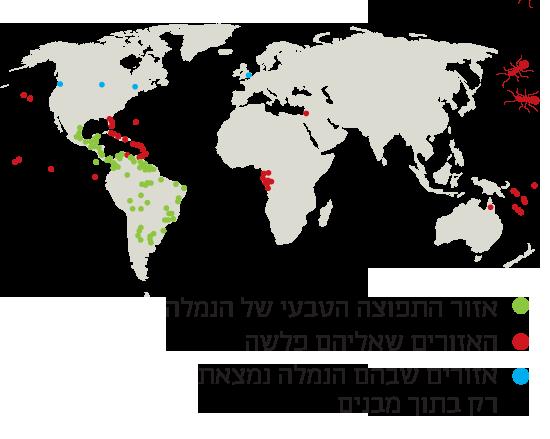 מפת התפוצה העולמית של נמלת האש הקטנה