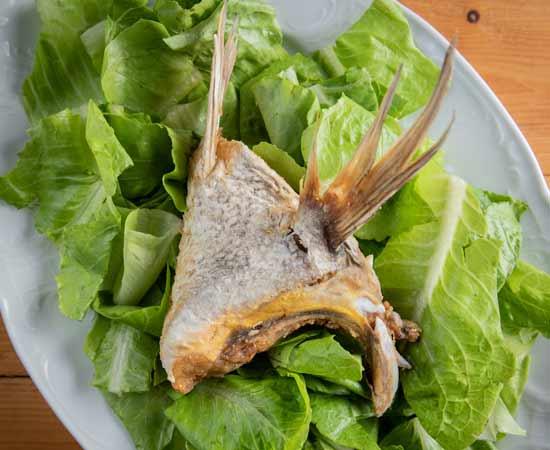 כנף הדג/ צילום: גל זהבי