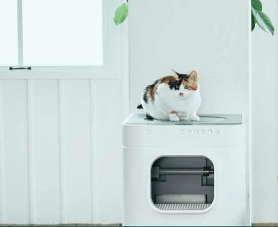 שירותי IoT רובוטיים לחתול/ צילום: יחצ