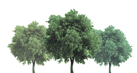 נטיעת עצים / צילום: Shutterstock | א.ס.א.פ קריאייטיב