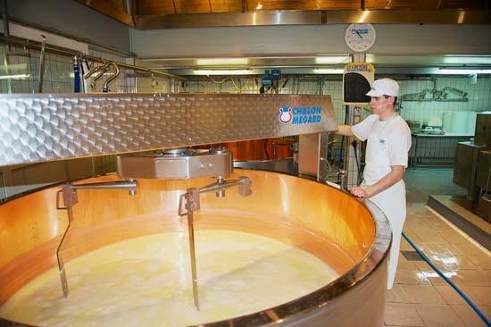 ייצור של גבינת הגרוייר המקומית/ צילום: Shutterstock | א.ס.א.פ קריאייטיב