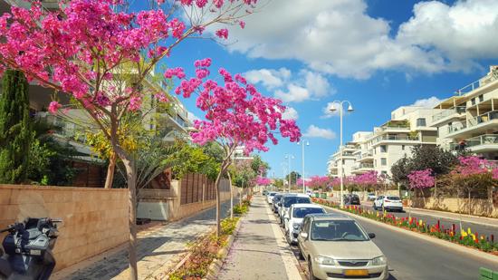 רחוב בנס ציונה?/ צילום: Shutterstock א.ס.א.פ קריאייטיב
