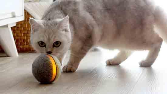 צעצוע אוטונומי לבעלי חיים/  צילום: יחצ