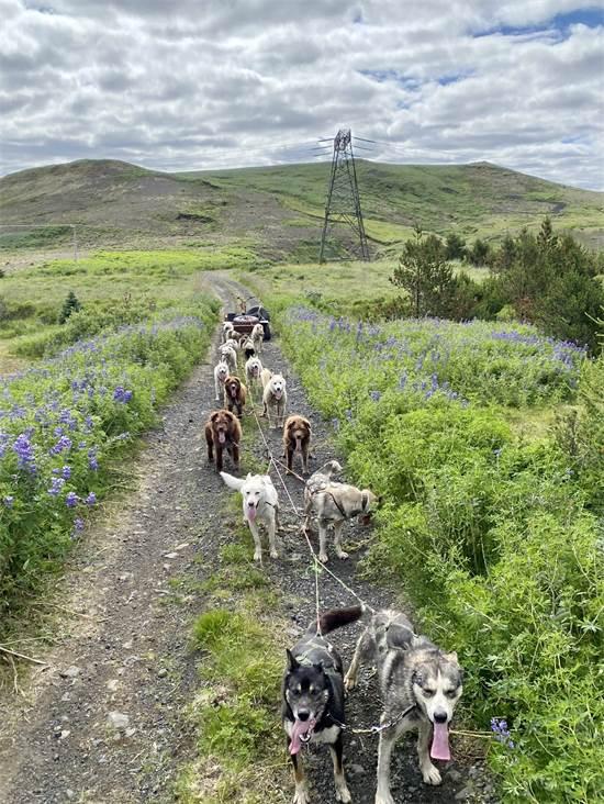 מטיילים עם המזחלת גם בקיץ האיסלנדי  / צילום: תמונה פרטית