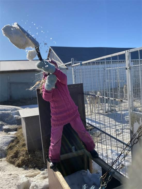 מרי לו (8) מפנה שלג מהכלובים של הכלבים / צילום: תמונה פרטית