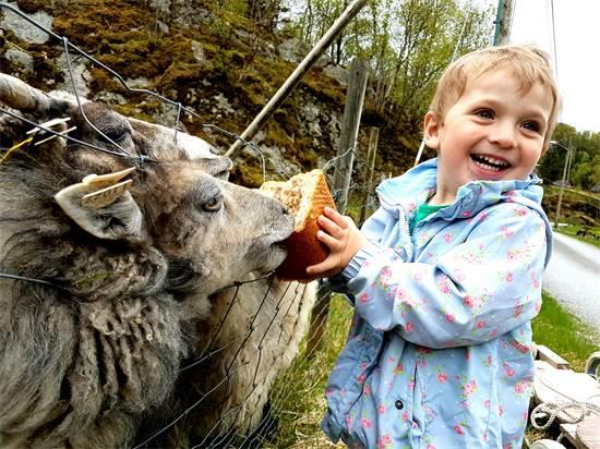 דניאל (6) מאכיל את הכבשים / צילום: תמונה פרטית