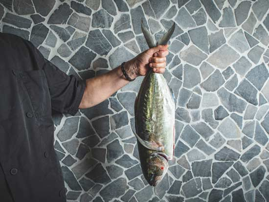 דג היום משאראק /  צילום: שני בריל