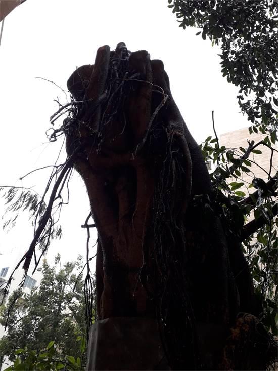 עץ כרות / צילום: רבקה ויסברג