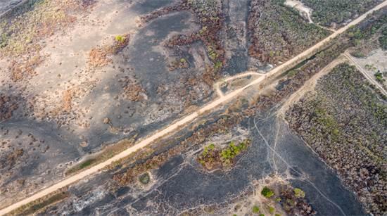 """נזקי השריפות בשטחי הפנטנאל. נאס""""א מעריכה כי בין ינואר לאוגוסט עלו באש מעל 20 אלף קמ""""ר של יער הגשם / צילום: Leandro Cagiano, גרינפיס"""